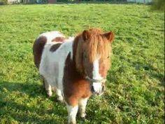 Konik na biegunach Urszula - YouTube Poland, Cow, Horses, Youtube, Animals, Animales, Animaux, Horse, Animal Memes
