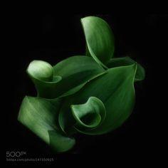 leaves by keimi3