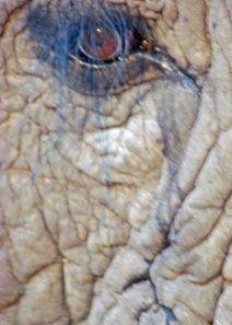 Jabu's eye. Lovely examination of our oneness with nature. #nature #wildlife #activism #writing