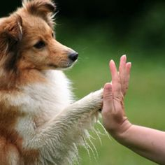 how to teach your dog new tricks