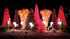 The St. Louis Zoo comes to life after dark with animated Wild Lights displays, such as Arctic Wonderland, Swan Lake and Fantasy Butterfly Garden, illuminating the property. Storytellers including Tundra Tom spin tales around a fire as visitors warm up and sip hot cocoa.
