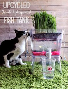 DIY Aquarium Ideas - Upcycled Fish Tank - Cool and Easy Decorations for Tank Aquariums, Mason Jar, Wall and Stand Projects for Fish - Creative Background Ideas - Fun Tutorials for Kids to Make With Plants and Decor - Best Home Decor and Crafts by DIY JOY http://diyjoy.com/diy-aquariums