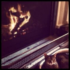 nothing more relaxing than a cat by the fire