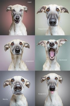 The many faces of Scout - Elke Vogelsang - Hunde - Silly Dogs, Funny Dogs, Funny Dog Pictures, Tier Fotos, Animal Faces, Dog Show, Dog Portraits, Dog Photos, Dog Art