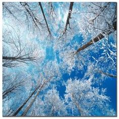 @Overstock - Add the finishing touch to your home or office decor with this contemporary canvas art by Philippe Sainte-Laudy. This gallery-wrapped artwork  features a beautiful landscape scene that will allow you to effortlessly bring the outdoors inside.http://www.overstock.com/Home-Garden/Philippe-Sainte-Laudy-Frozen-Sky-Canvas-Art/5606561/product.html?CID=214117 $72.99