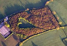 Tribute: A farmer's touching memorial to his wife of 33 years who died suddenly 17 years ago. The trees were planted after the death and have grown into a meadow with heart in the middle