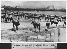 Sharing Remount depot, Gibbons Road, at Upper Hutt City Library The Hutt, City Library, Lest We Forget, World War One, Present Day, New Words, Old Pictures, New Zealand, Army