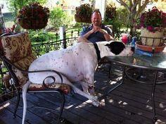 O cachorro que tá pronto para comer mas acha que tá DEMORANDO:   21 cachorros que estão completamente enganados a respeito do próprio tamanho