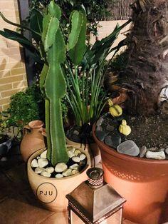 Los cactus están de moda, yo tengo dos, me encantan por ese color verde tan intenso. Quedan perfectos en cualquier estancia y en el exterior, mis lugares preferidos son en la cocina o el baño.  Recomiendo comprarlo grande. Pazugena.com, También puedes mirar estos enlaces, Mis cactus , Mi nuevo cactus  .