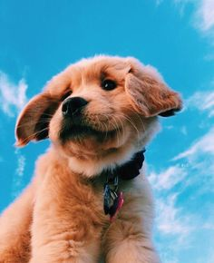 Baby Animals Super Cute, Super Cute Puppies, Cute Little Puppies, Cute Little Animals, Cute Dogs And Puppies, Cute Funny Animals, Baby Dogs, Doggies, Corgi Puppies