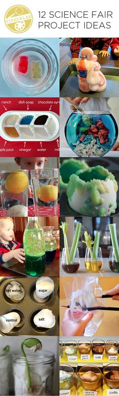 These twelve science fair project ideas encourage children to test, tinker with, experiment, hypothesize, and evaluate various properties and phenomena.