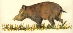 "Wild boar pig hog hunt bad fat grass forest animal 8x4"" 21x9.5 cm art original Watercolor painting by Juan bosco"