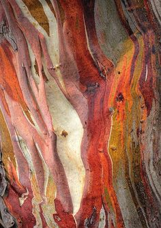 Painting Tree Bark Texture Ideas For 2019 Patterns In Nature, Textures Patterns, Nature Pattern, Art Grunge, Art Et Nature, Photocollage, Alphonse Mucha, Art Abstrait, Tree Bark