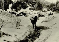 """~ Detail from Hegg photo, Neg. #334. Circa 1897.  White  Pass...the """"dead horse trail"""""""