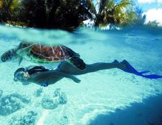 Your ultimate guide to Bora Bora. Discover why Bora Bora really is a Paradise Island in the middle of Pacific Ocean with Breathtaking Beaches and Resorts. Snorkeling, Air Tahiti Nui, Places To Travel, Places To See, Sea Turtle Pictures, Bora Bora Island, Best Friend Bucket List, Summer Vacation Spots, Playa Beach