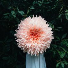 Tiffany Turner's amazing paper flowers :: HEADS_dahliaII.jpg