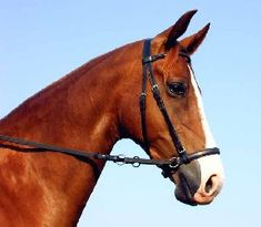 Natural Horse World - Bitless Bridles explained and compared