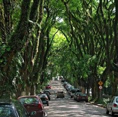It is my dream to live on a street with mature trees like this.  Seriously.