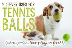 4 Clever Uses for Tennis Balls (After You're Done Playing Fetch!)   eBay