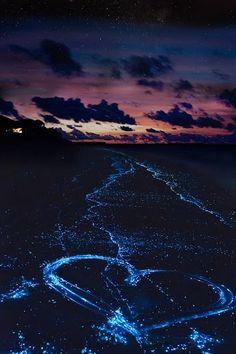 Sea of Stars on Vaadhoo Island in the Maldives