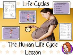 Human Life Cycles - Complete Science Lesson by TheGingerTeacher - Teaching Resources - Tes Lessons For Kids, Science Lessons, Teaching Science, Teaching Kids, Teaching Resources, Human Life Cycle, Script Writing, Life Cycles, Classroom Activities