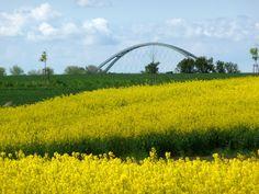 Fehmarnsundbrücke mit Rapsblüte von HEI-RUE