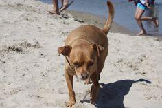 A la playa. #dogdays
