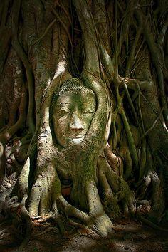 Buddha Head at Wat Mahathat, Ayutthaya, Thailand Loved and Pinned
