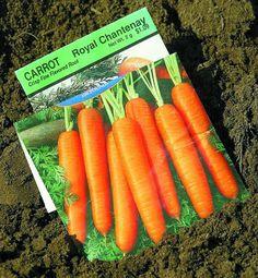 Tips from Alaska gardeners for success despite cold spring
