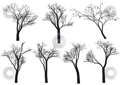 Tree silhouettes, vector stock vector clipart, Set of detailed tree silhouettes, vector by Beata Kraus