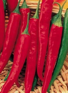 Cayenne Long Slim Pepper Plant - Very attractive plant, which can be grown in a large container or pot adding to the beauty of a garden. A very productive plant, producing an abundance of peppers, well into the fall. #live #plant