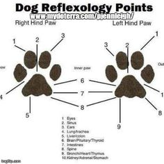 Dog Reflexology Points, Essential Oils for Dogs, Dogs and Essential Oils, DoTerra, www.mydoterra.com/jaccrooker