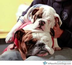 Reminds me of my grandpuppies Rosie and Lilly!  So cute!