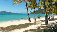 Airlie Beach is a city found in Whitsunday Area of Queensland in Australia. It is one of the numerous undertaking areas for Terrific Barrier Reef. Logan City, Hamilton Island, Airlie Beach, Short Break, Picnic Area, Luxury Holidays, Great Barrier Reef, Western Australia, Australia Tours