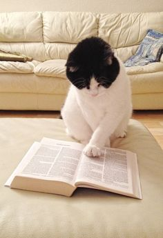 Beautiful cat doing serious reading
