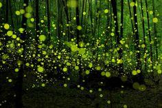 Les forêts font partie des nombreux lieux incroyables que la nature nous offre sur notre belle planète. Certains de ces sites boisés font…