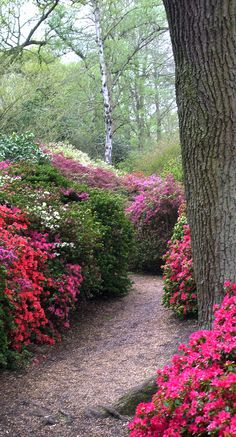 The Isabella Plantation has the best show of rhododendrons and azaleas in London. A woodland garden in the heart of Richmond Surrey, Richmond Upon Thames, Richmond Park, Old Southern Plantations, Places To Travel, Places To Go, Famous Gardens, Garden Park, Gardens