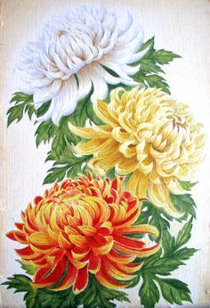Chrysanthemum Drawing, Japanese Chrysanthemum, Chrysanthemum Flower, My Flower, Flower Art, Cactus Flower, Watercolor Flowers, Watercolor Paintings, Crysanthemum