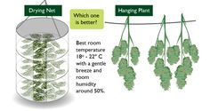 http://Papr.Club - Another cool link is lgexotictransport.com  Drying cannabis net vs hanging cannabis buds