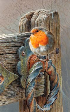 Andrew Hutchinson | Robin Perching on a Gate