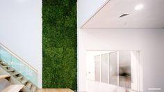 Een moswand hoeft niet uw hele muur te bedekken. Een strook toepassen kan ook al het groene effect binnen uw bedrijf of interieur weergeven. Een groene binnenkomst gegarandeerd! #mos #moss #mrmoss #moswand #moswandnl #moswandeurope #moswall #mosswalls #moslogo #mosslogo #oasegroen #ammerzoden #interiordesign #interior #interiors #interieurdesign #interieurbeplanting #interieur #verticaalgroen #green #groenewand #groen #mosletters #wandbekleding #greenwall #mooswand