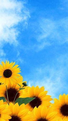 O Girassol flor planta Amarela Fundo