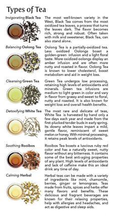 Different Types of Tea | Tea 101: Types of Tea