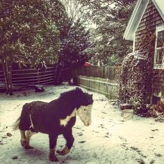 WHIMSY WILLOWS FARM : Dashing through the snow ~ pony style