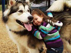 fille chien husky calin