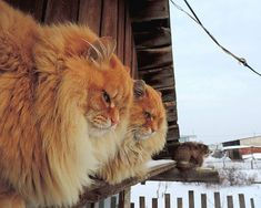 Siberian Cats Waiting For Spring… » Design You Trust. Design, Culture & Society.