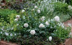 : Розы на клумбе
