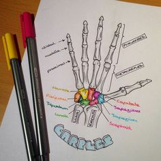 """Sarah Clifford is """"a medical student and a biology tutor with a passion for creating illustrated notes."""" We think these illustrated notes for medical school are great study help! Life Hacks For School, School Study Tips, School Life, Nursing School Notes, Medical School, Nursing Schools, Medical Students, Nursing Students, Radiology Student"""