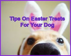 Tips On Easter Treats For Your Dog  ... see more at PetsLady.com ... The FUN site for Animal Lovers