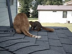 Squirrel playing with cat - Imgur